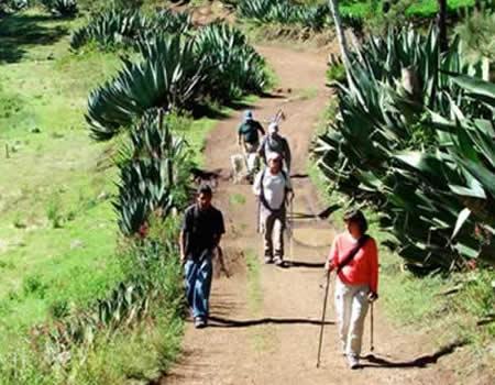 oaxaca-caminata-14
